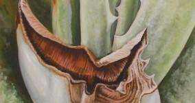 Aloescape no.3