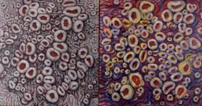 Ochrolechia variations