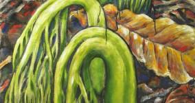 Rattlesnake Ferns
