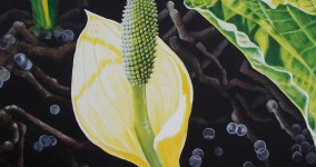 Skunk cabbage III
