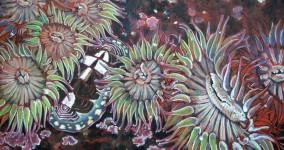 Anemones & Chiton