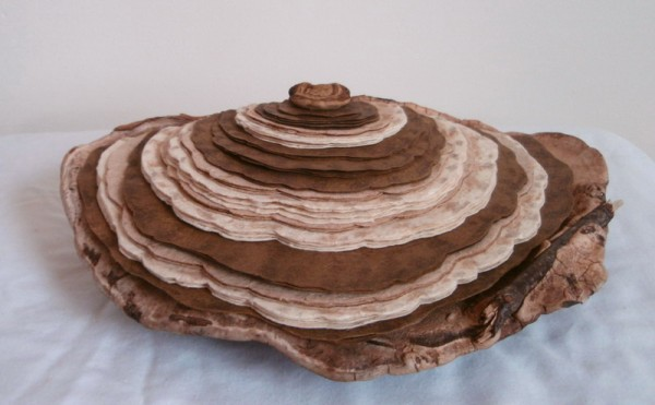 ganoderma seated