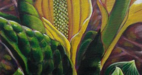 Skunk cabbage IV
