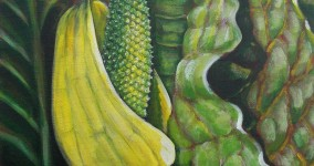 Skunk cabbage V